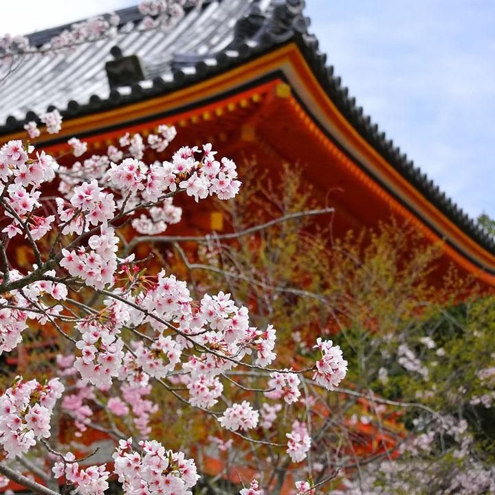京都での暮らしに興味を持ったなら